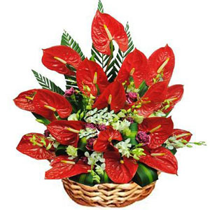 New Year Flowers to Chennai
