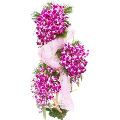send flowers to chennai, orchids flowers to chennai,flowers, Beautiful flower